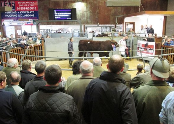 2014 CASTLE DOUGLAS AUTUMN SALE