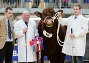 2015 STIRLING BULL SALES 16 FEBRUARY
