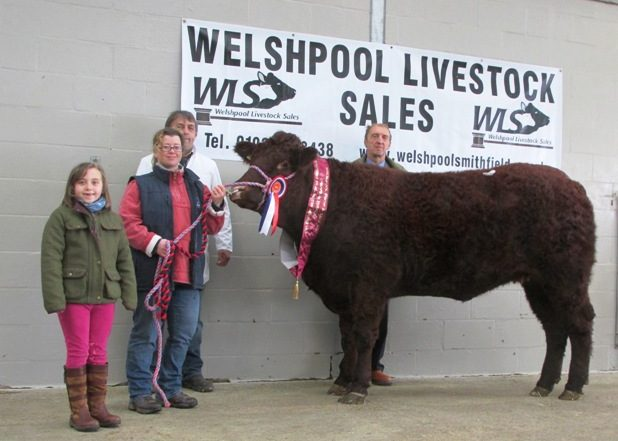 2016 WELSHPOOL SPRING SALE
