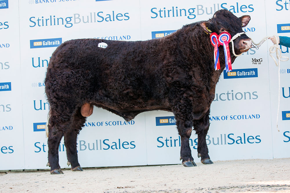 Champion Bull Cuil Herbie from G S McClymont also top price at 8,000gns