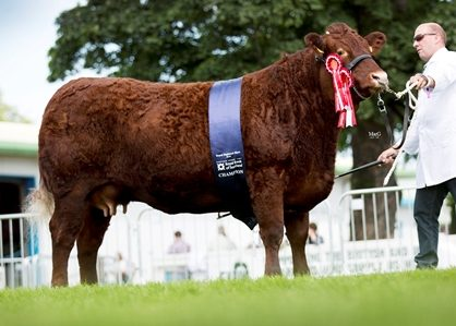 2016 ROYAL HIGHLAND SHOW INGLISTON