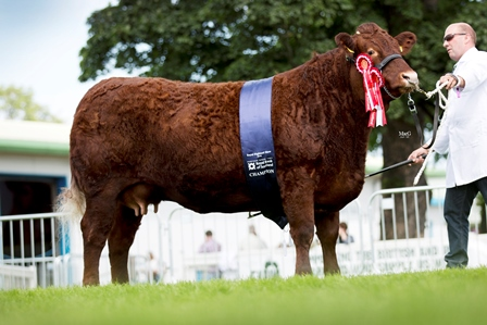 Supreme Champion and Female Campion Drumlegagh Galaxy