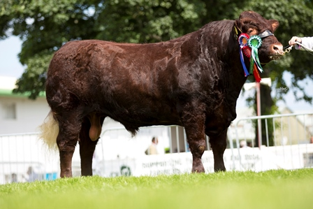 Reserve Supreme Champion and Male Champion Drumlegagh Hamish