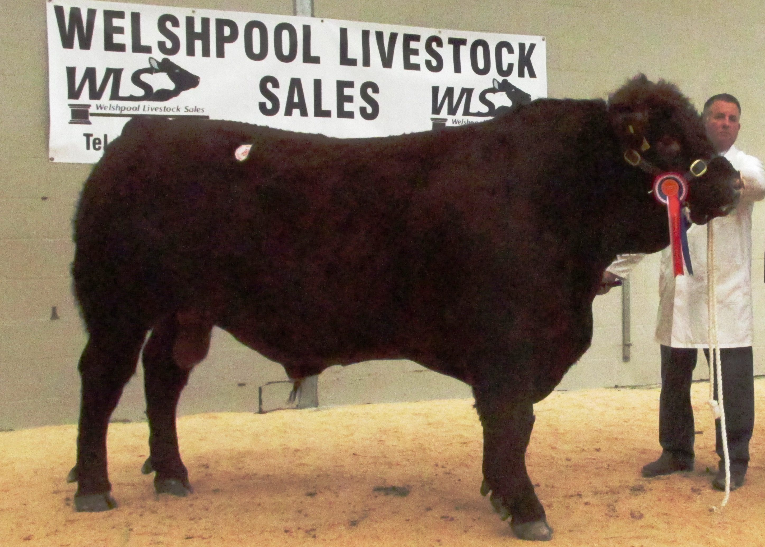 2017 WELSHPOOL MAY SOCIETY SALE