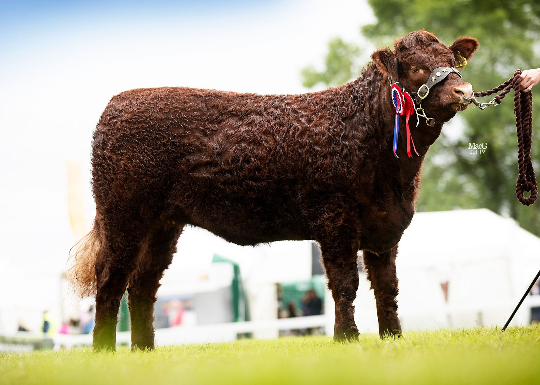 2019 GREAT YORKSHIRE SHOW HARROGATE