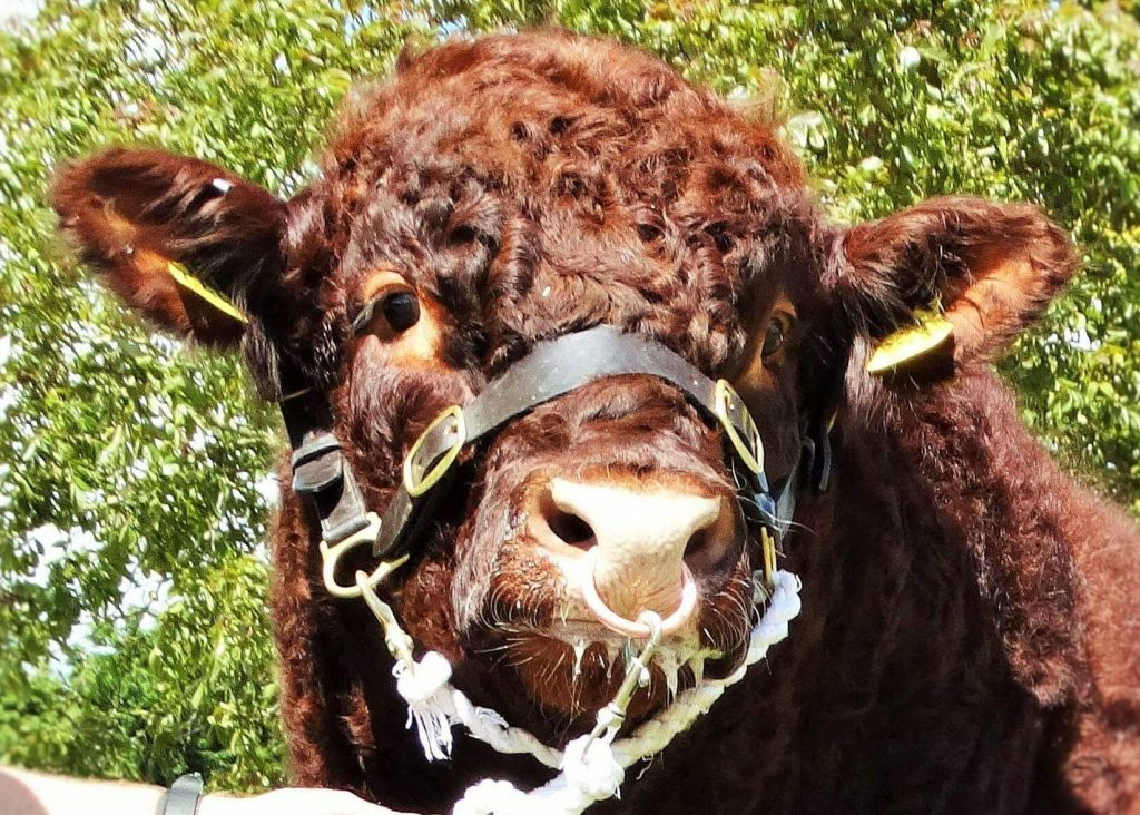 STIRLING BULL SALES – MAY 2020