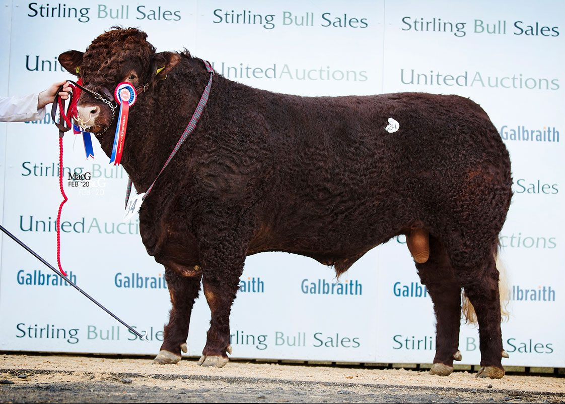 STIRLING BULL SALES – FEBRUARY 2020