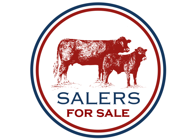 FOR SALE – COMMERCIAL CATTLE (PREENBANK)