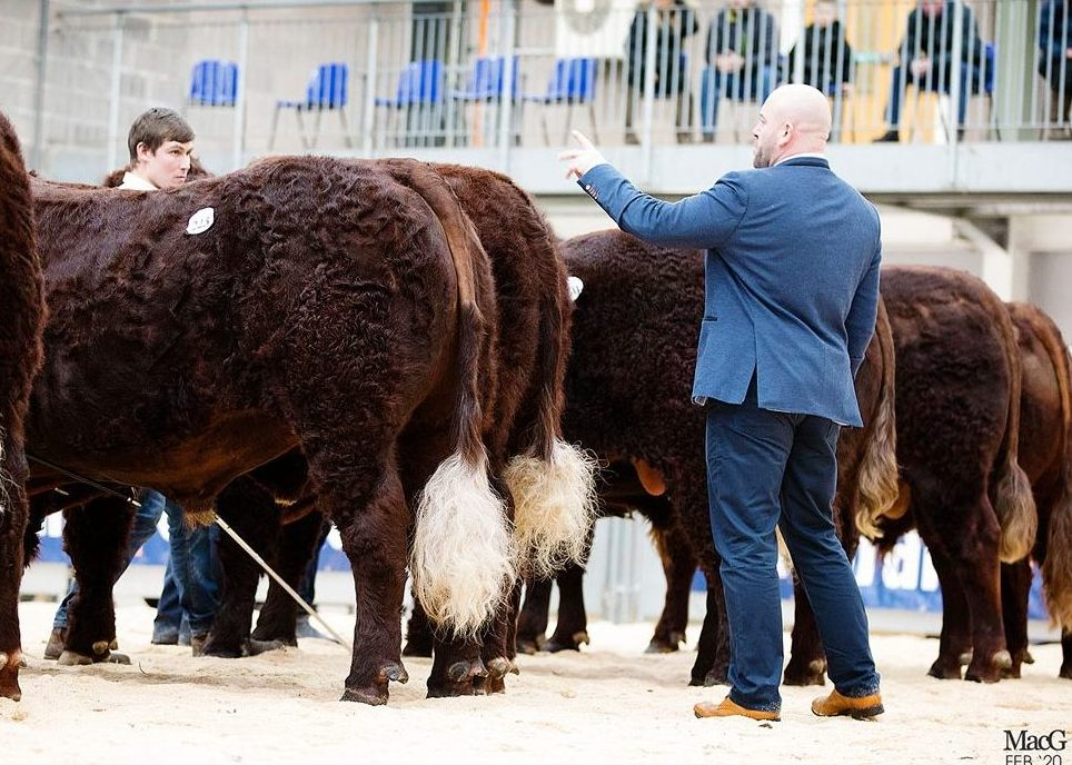 STIRLING BULL SALES CATALOGUE
