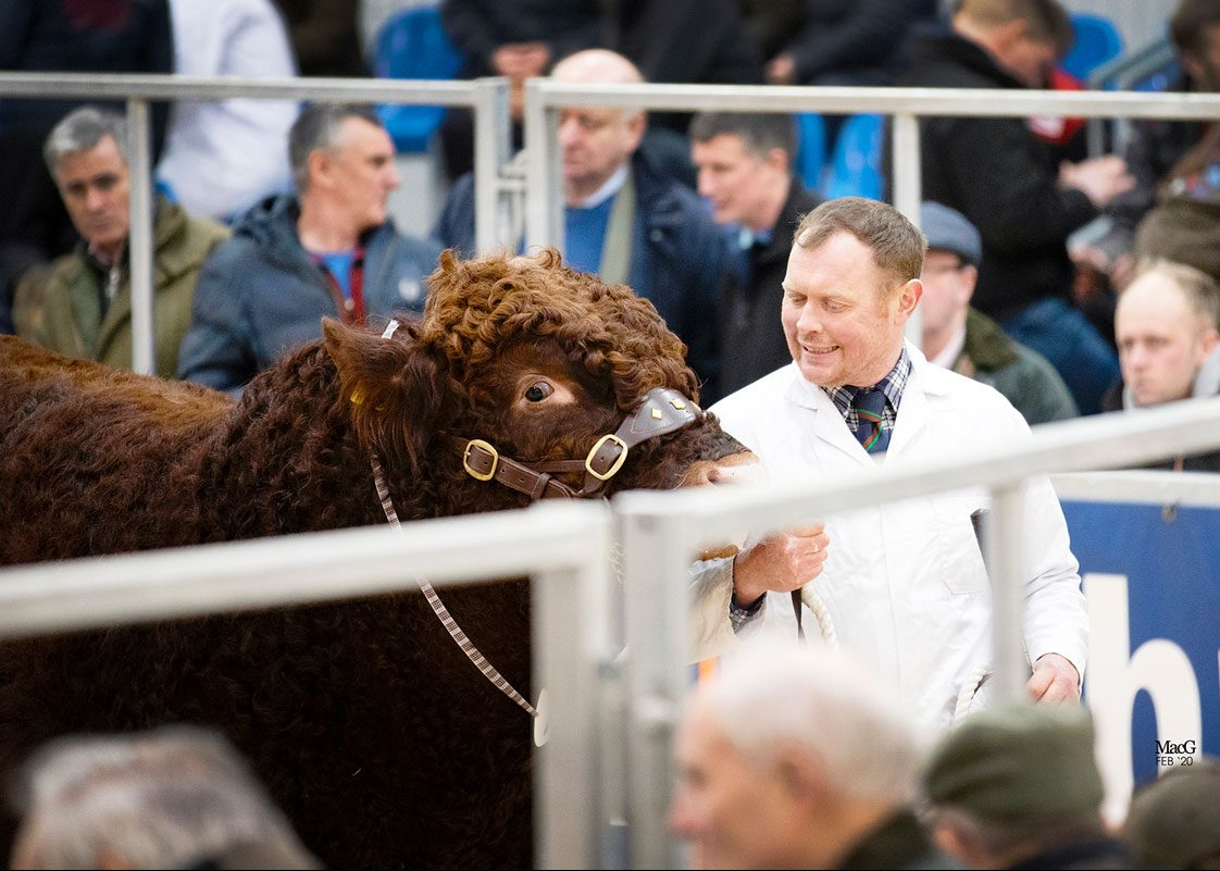 FEB 21 – STIRLING BULL SALES PROGRAMME