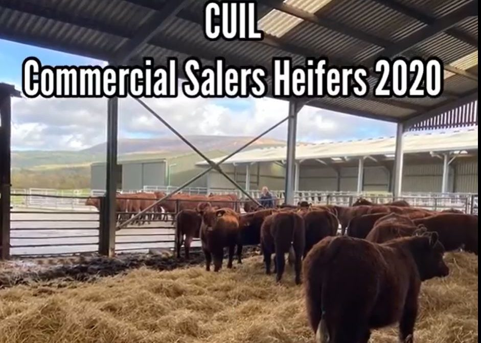 PREMIER SALE – ENTRIES FROM CUIL