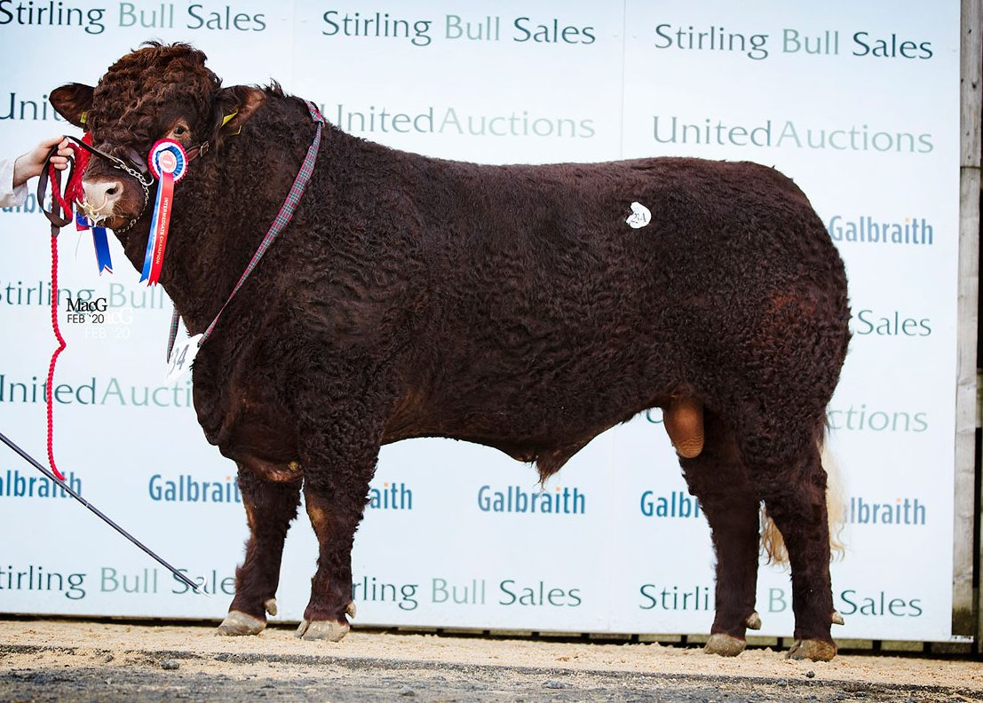 FEB 2021 – STIRLING BULL SALES – CATALOGUE