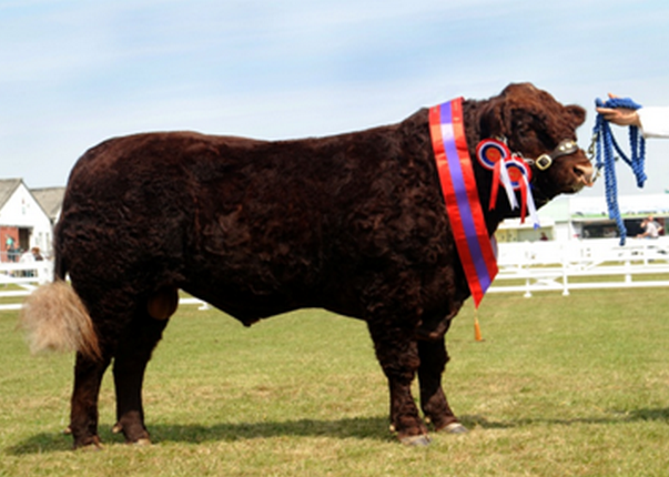 Read more about the article SEAWELL BRED BULL CLINCHES GYS 2011