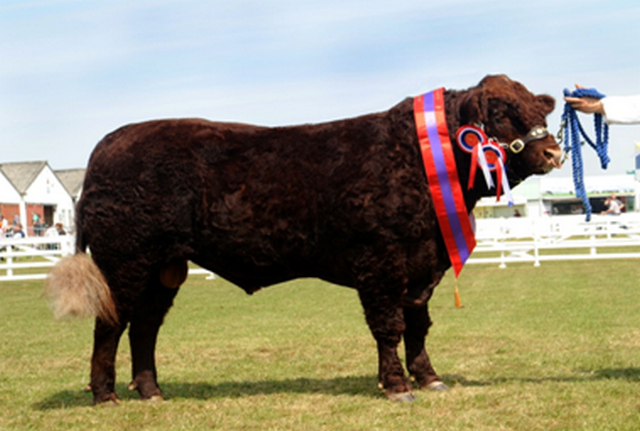 Great Yorkshire Show champion