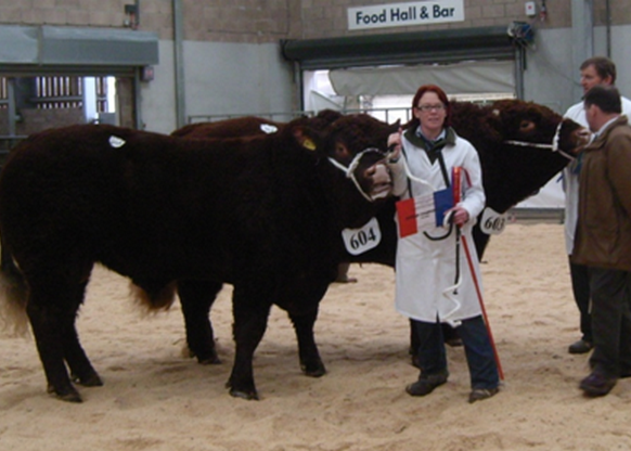 Read more about the article TRADE PEAKS AT 5600gns STIRLING