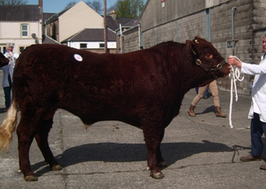 Read more about the article 4200gns TOP CASTLE DOUGLAS SPRING