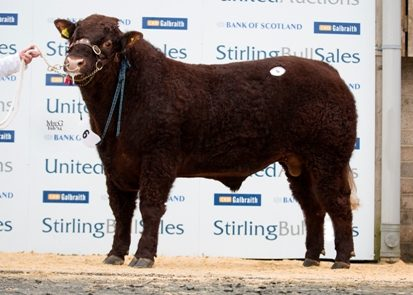 Read more about the article 7800gns TOP PRICE AT STIRLING BULL SALES