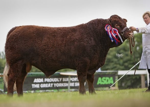 Read more about the article FANTASTIC STANDARD AT GREAT YORKSHIRE