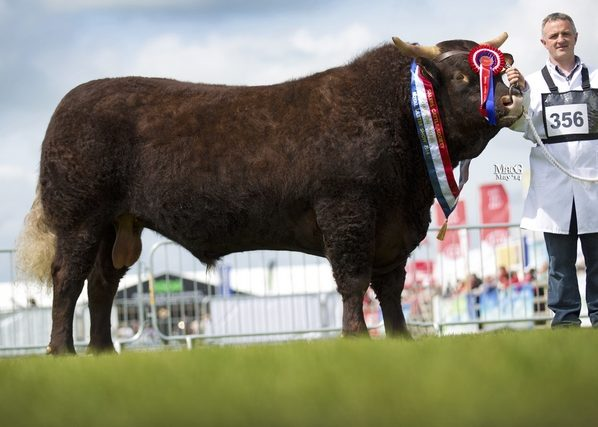 Read more about the article SNR BULL OVERALL CHAMP. AT BALMORAL