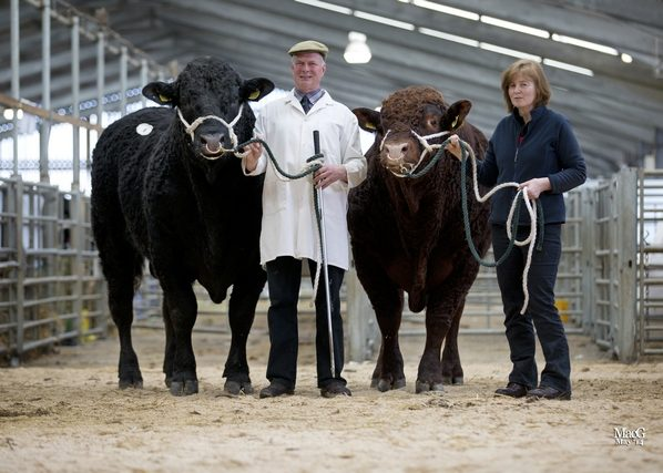 Read more about the article 5000gns TOP FOR RIGEL AT STIRLING