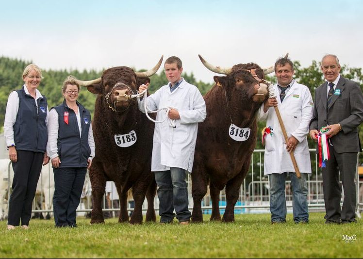 Read more about the article 2015 ROYAL WELSH SHOW LLANELWYDD