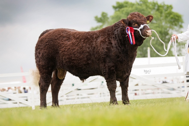 Reserve Breed Champion - Cumbrian Capermello