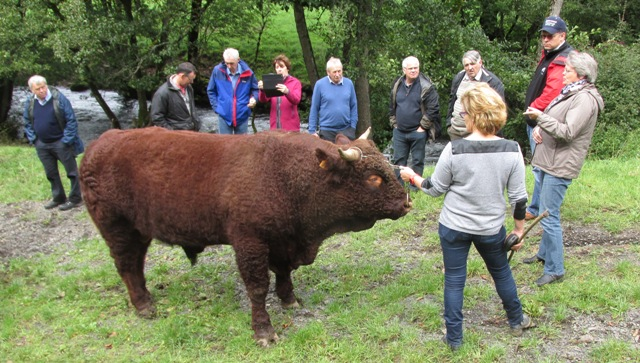 Martine Chassang telling us about this bull