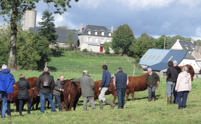 Beautiful walking among the cattle and superb back drop