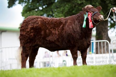 Junior Female Champion Drumlegagh Kyra