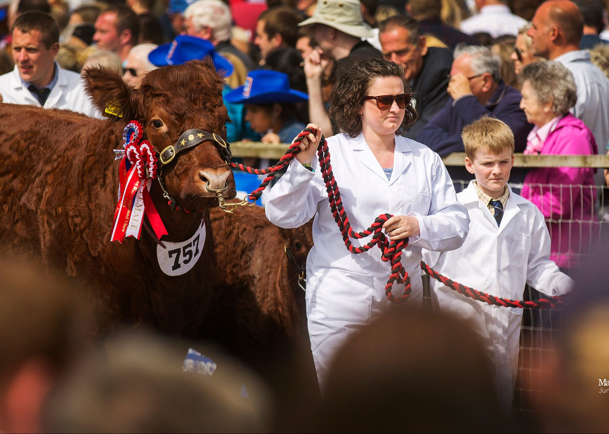 Read more about the article 2018 ROYAL HIGHLAND SHOW INGLISTON