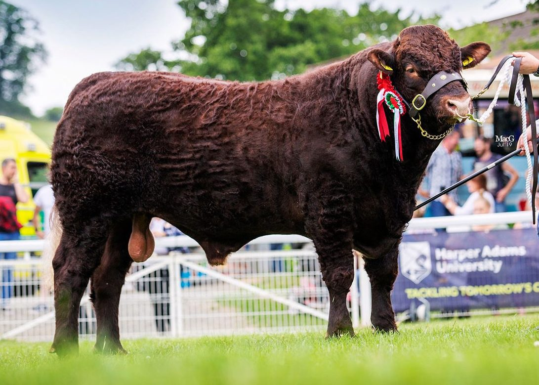 Read more about the article 2019 ROYAL WELSH SHOW LLANELWEDD