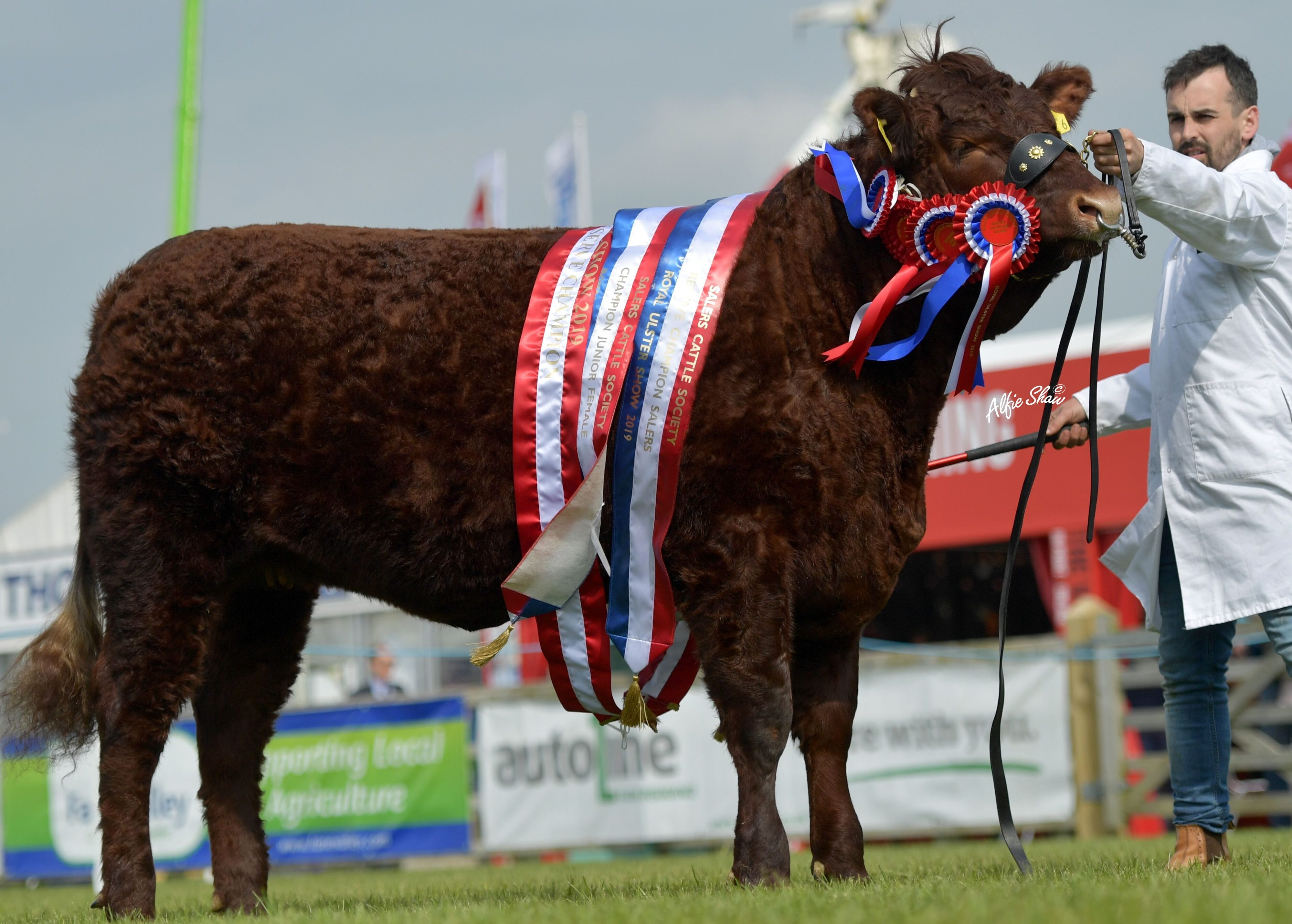 Read more about the article 2019 BALMORAL SHOW (ROYAL ULSTER SHOW)