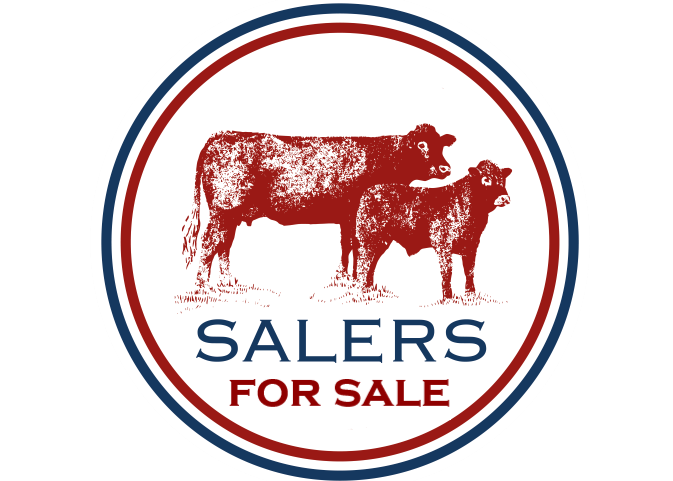 Read more about the article FOR SALE – 9 YEARLING HEIFERS