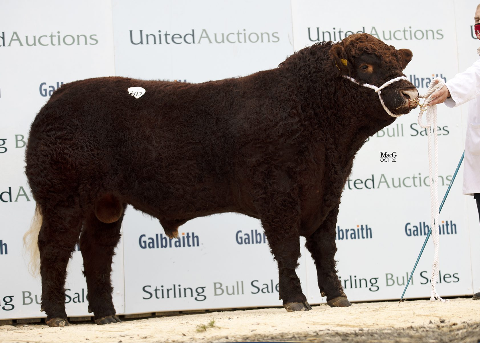 Read more about the article STIRLING BULL SALES – OCTOBER 2020