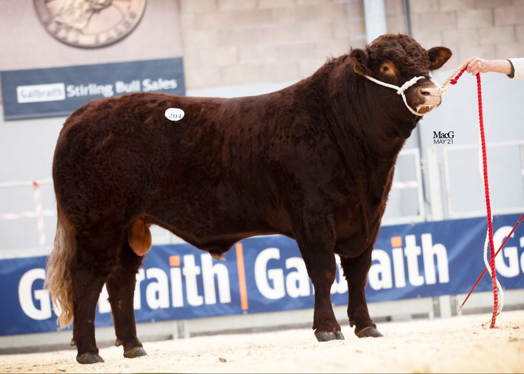SALE REPORT – STIRLING BULL SALES MAY '21