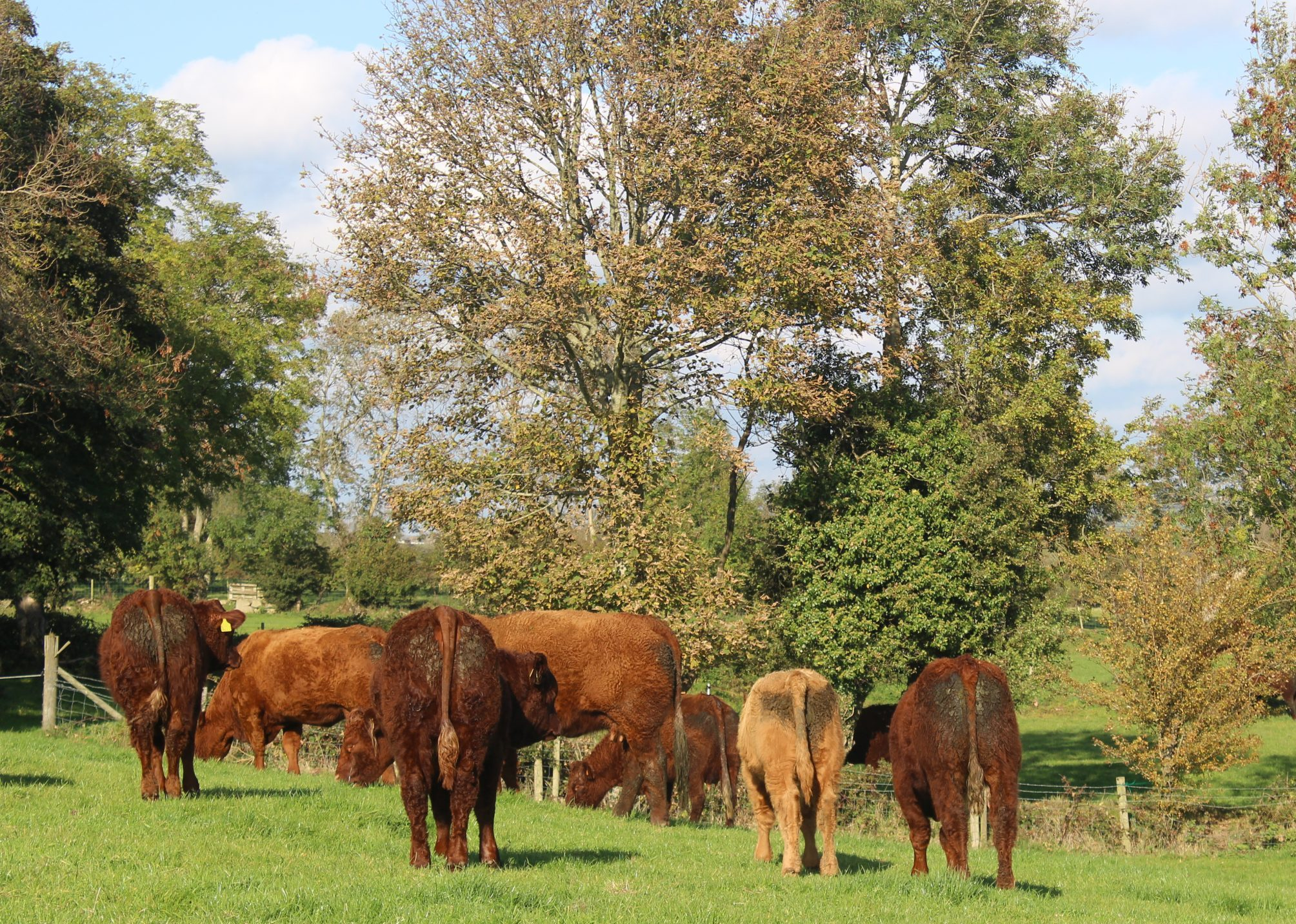 Read more about the article THE PERFECT BREED FOR THE PART TIME FARMER